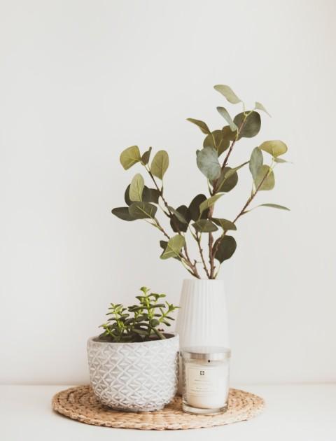 Άνθη - Φυτά